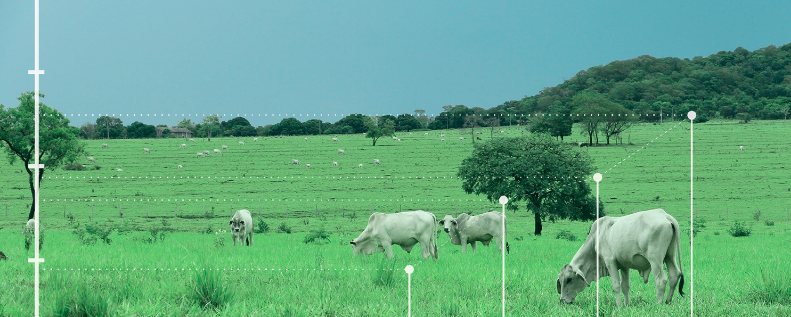 Tecnologia na criação de bovinos