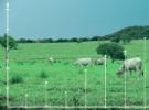 Tecnologia e modernização na pecuária de corte