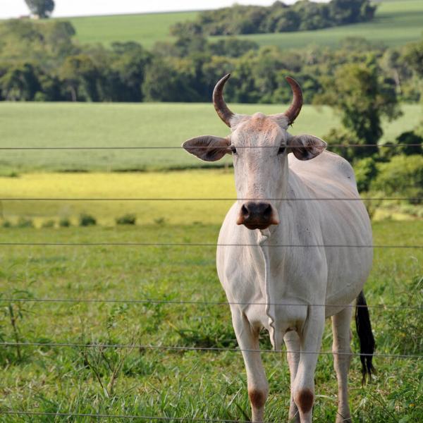 modernização da pecuária de corte