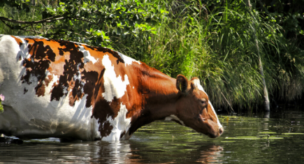 consumo de matéria seca do gado de corte