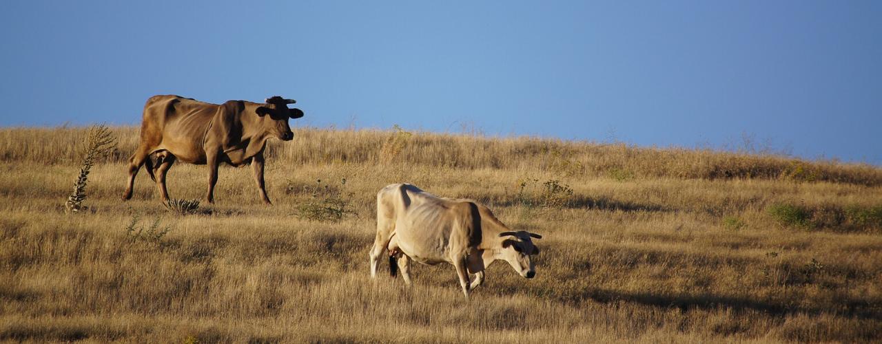 Gestão Pecuária   Como lidar melhor com o período das secas?