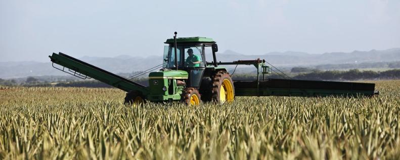 Trator realizando colheita para silagem e evitar efeito sanfona