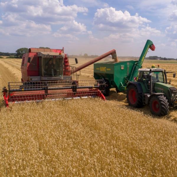 trator realizando colheita para silagem